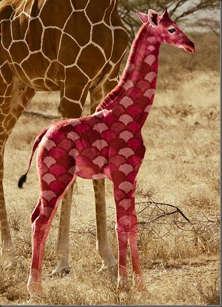 GL6_Giraffe-04-RGB C-UFinal_WEB_LR
