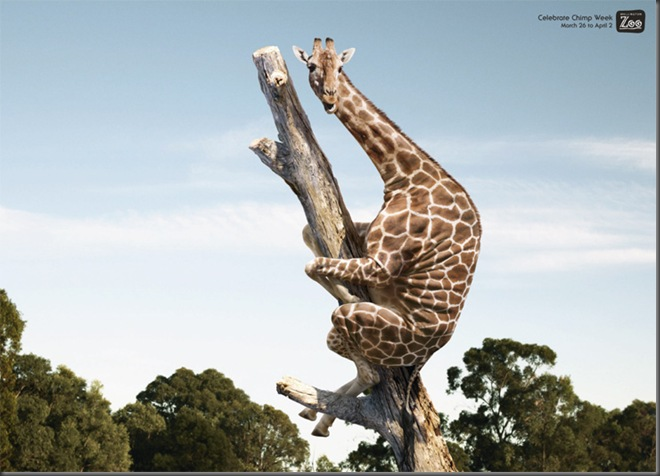TO620_Giraffe text_web