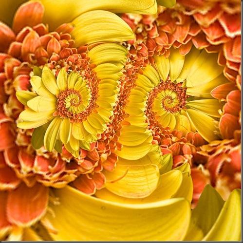 Flower_poles_large