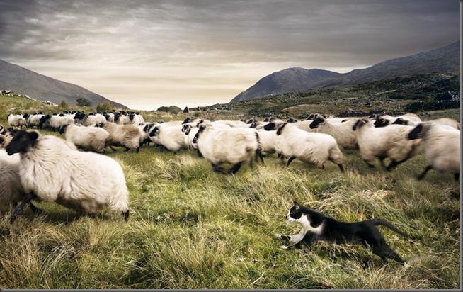 whiskas_sheepcat