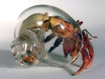 Hand Blown Glass Hermit Crab Shells