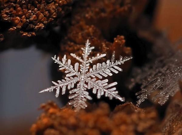 snowflakes-macro-photography-andrew-osokin-8-600x446